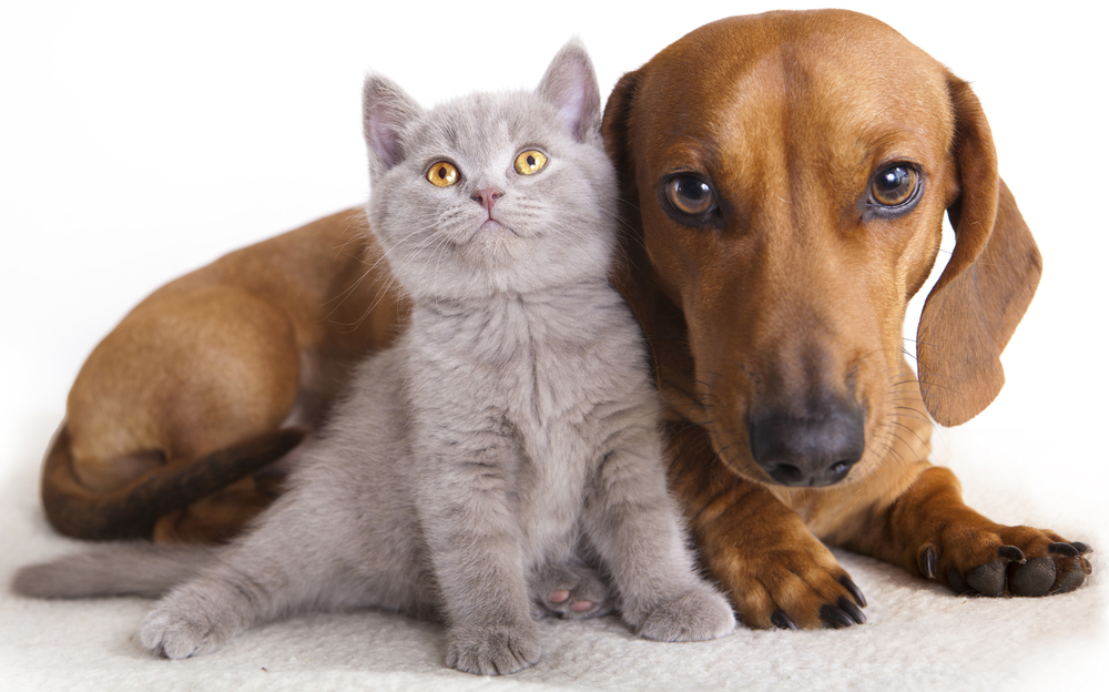 https://www.apsofdurham.org/wp-content/uploads/2017/04/dog-and-cat.jpg