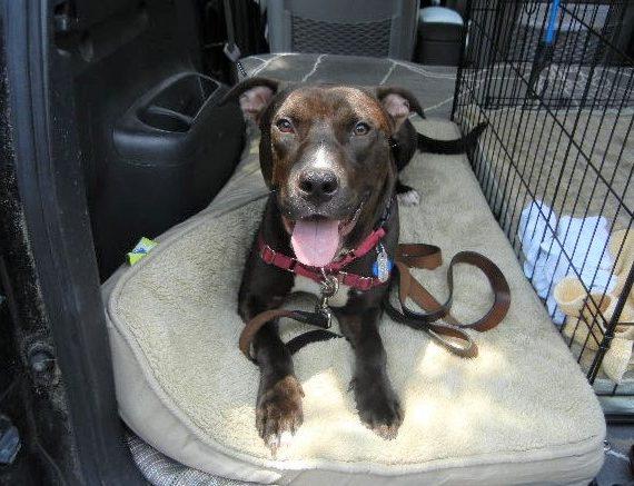Choco – Adoption fee reduced to $50!