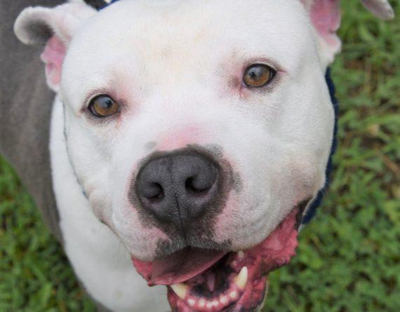 Logan – $30 adoption fee for July!