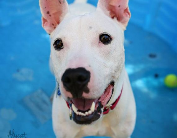 Rocco – $50 adoption fee! For a limited time!