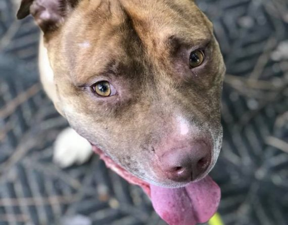 Chip – $50 adoption fee! For a limited time!