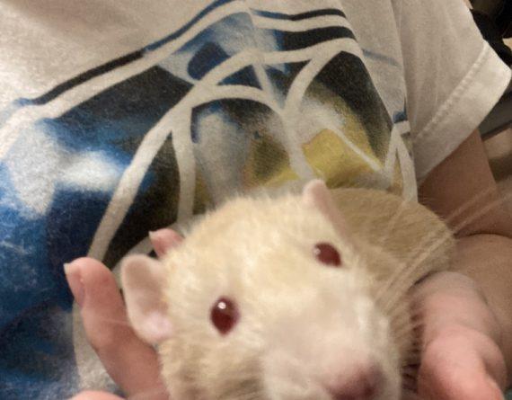 Ratsberry