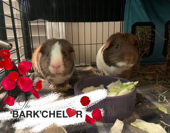 Cocoa (bonded with Marshmallow)